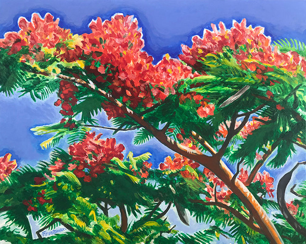 Royal Poinciana by David Friedman
