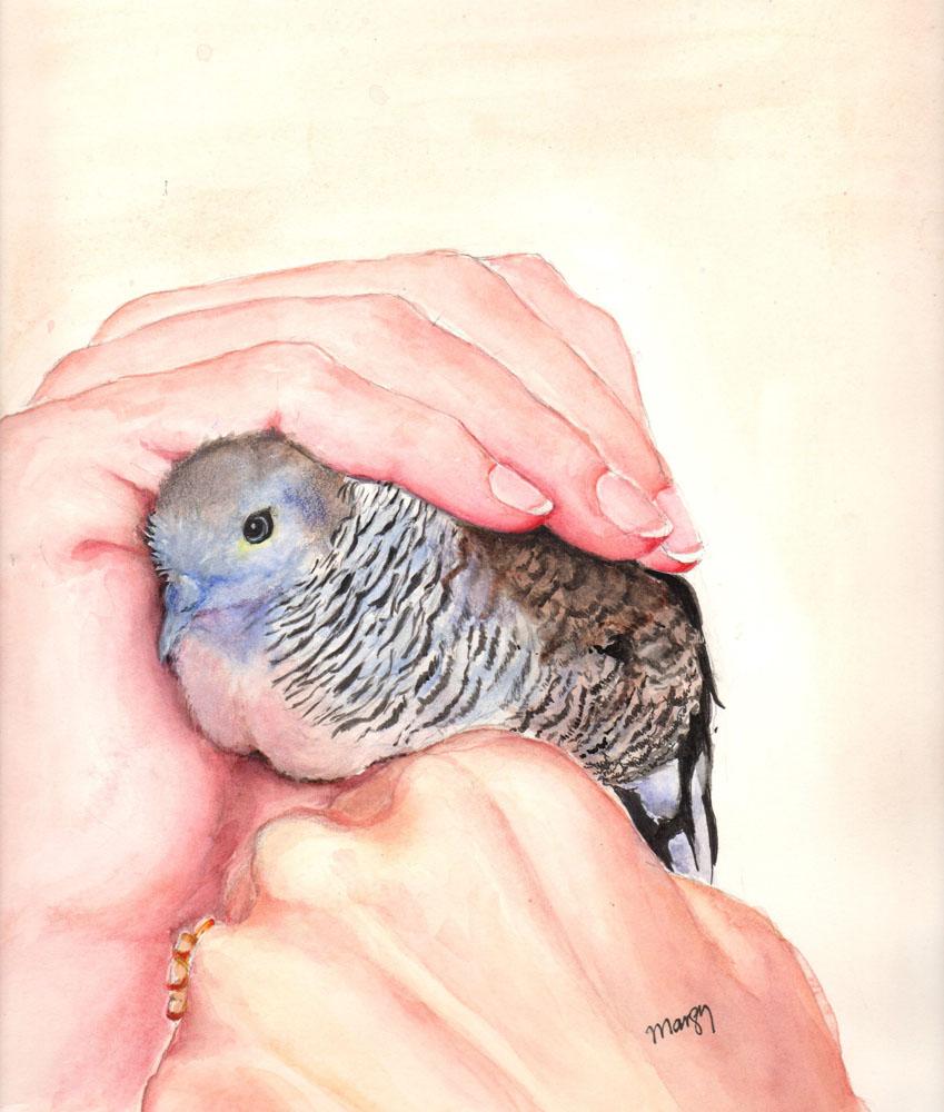 Clancy by Margy O'Kelly