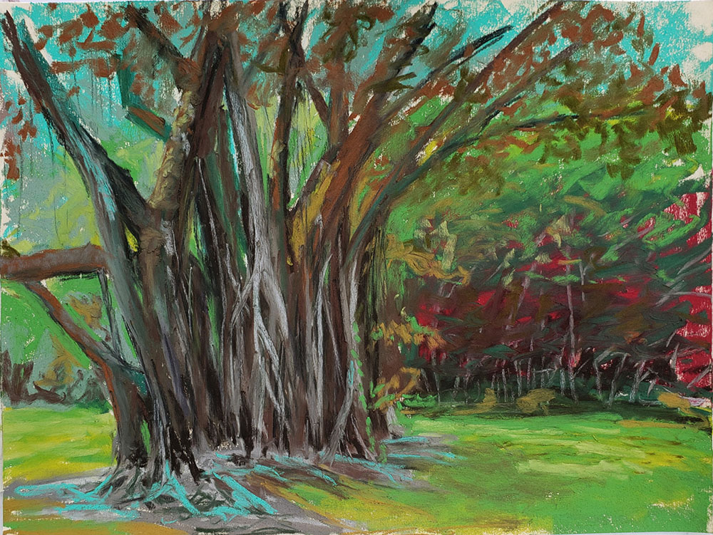 Ho'omaluhia Rubber Tree by Roger Tinius